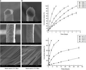 SEM of biodegradable and biocompatible chitosan fibers and their properties for drug controlled release [1].