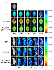 In vivo images of time-dependent whole brain and body imaging of mice after intravenous injection of surface modified liposomes [3].